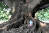 Meditazione dinamica: il corpo sa come guarirsi!